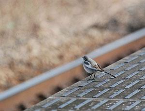 いつものまちだに会いにいく その2 「成瀬の小鳥と松ぼっくり」
