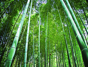 "TAKE-NO-WA ""Bamboo, Wow!"""